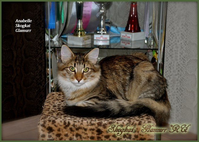 Anabelle at forest-cat.ru